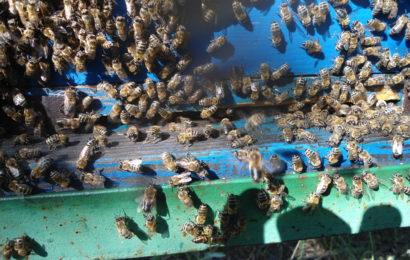 Когда пчелы не против меда: экспорт украинской продукции в страны ЕС